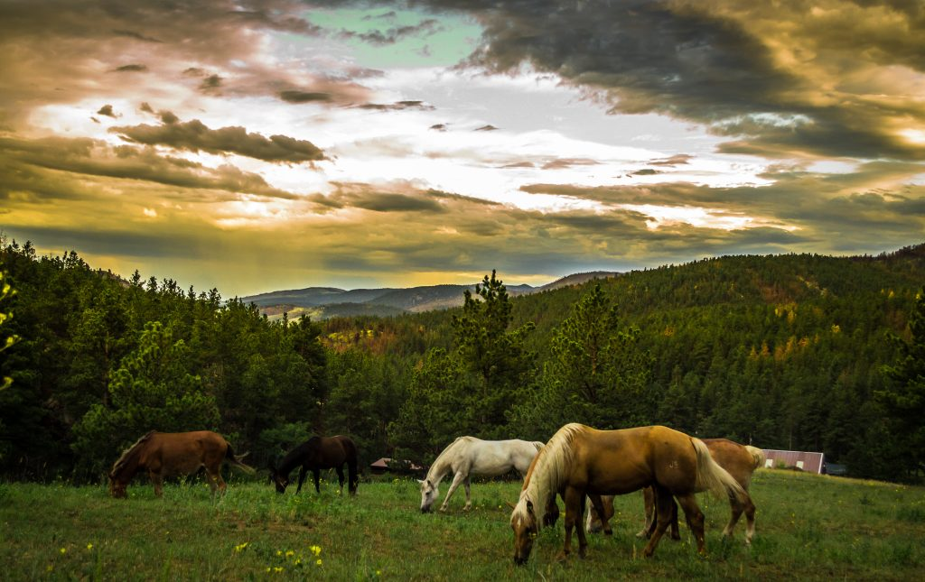 Horse Capitol horses grazing.